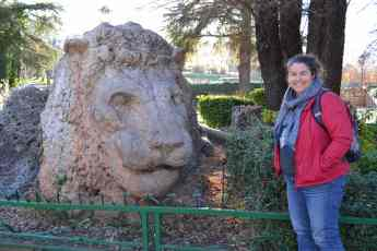 The Lion of Ifrane